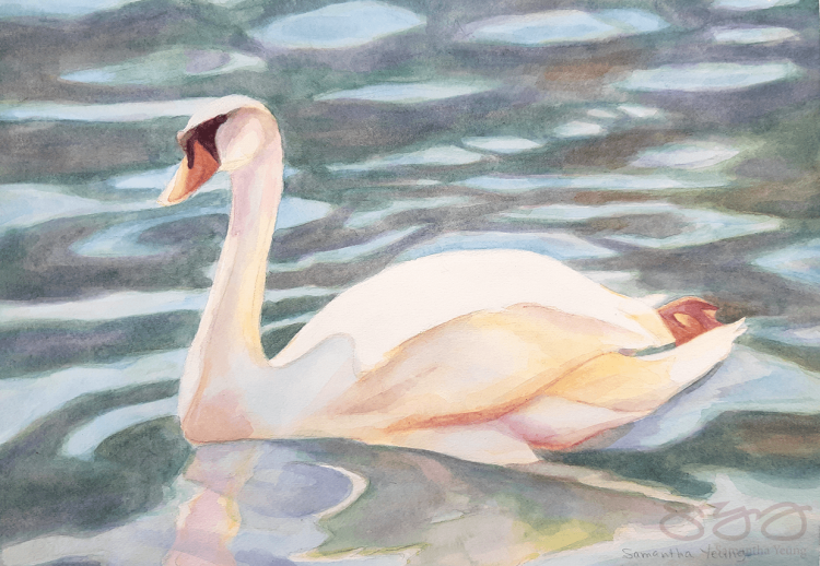 A watercolour painting on a swan in water.